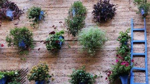 Vasi di fiori sul muro.