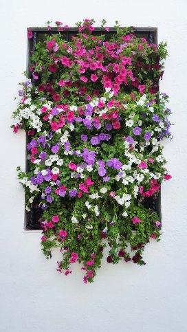 Una finestra di fiori.