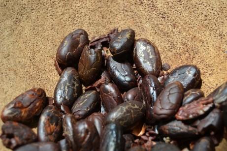 Cacao maturo.